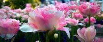 Rosen..Rosen von Wladimir Zarew