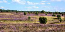 Heideblüte in der Lüneburger Heide by gscheffbuch