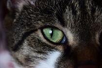 Cat's Eye von milla