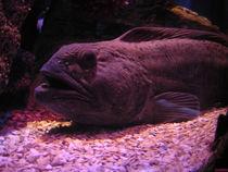Fisch by nachtlicht