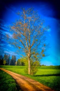 Tree 5612 von Mario Fichtner