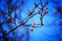 Blossomblue