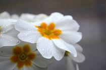 Flower von milla