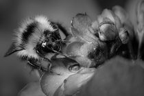 Bw-face-to-face-with-a-bee-1-of-1-2