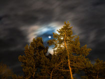 Moon and Trees by consen