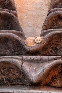 Eine kleine Katze mit rotem Fell liegt entspannt in einem Kunstwerk aus Holz by Gina Koch