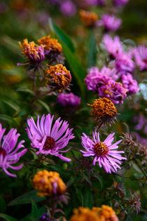 Blütenmerr von Sonja  Bausr