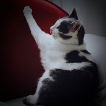 Katze streckt von walter steinbeck