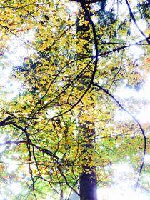 Herbstbaum von walter steinbeck