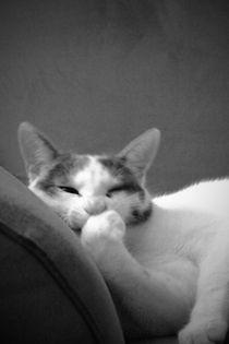 Katze Couchpotato von walter steinbeck
