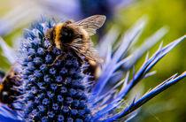 Bees2015-mayqw-copy