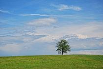 Baum-fuenfseenland1