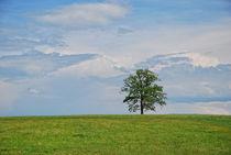 Baum im Frühjahr von Peter Bergmann