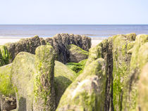 Seaweed covered stones at low tide von Nicole Bäcker