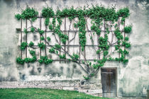 Winemakers wall 6064 by Mario Fichtner