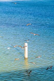 Seemöwen kreisen über dem leuchtend blauen Atlantik von Gina Koch
