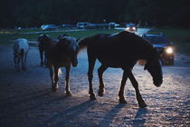 Light behind horses von Salvatore Russolillo