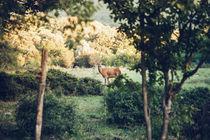 Lonedeer