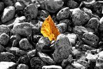 Autumn-rocks