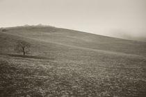 Der kleine Baum by Bastian  Kienitz