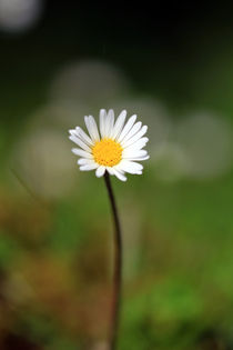 Blüte von Jens Berger