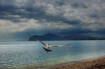 Seagull by Yuri Hope