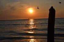 Vögel im Sonnenuntergang von Corinna Ruland