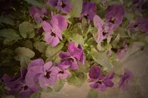 Vintage Violets von Heidi Piirto