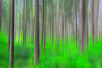 Im Schwarzwald von Patrick Lohmüller