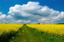 Gelbe-rapsfelder-in-der-sonne-mit-blauem-himmel-und-wolken-1390