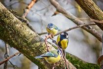 3birds