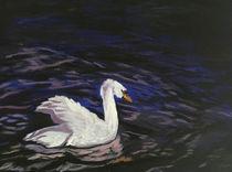 Evening-swan