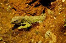 lizard - eidechse by mateart