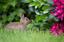 kleiner Blumenfreund by Susanne Schröder