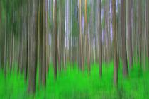 Frühling im Schwarzwald von Patrick Lohmüller