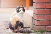 'Katze' von ness