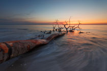 Death Tree II by your-pictures