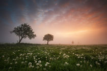 Pusteblumenfeld am Morgen. by your-pictures