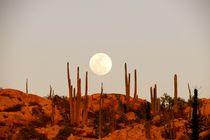 Desert full moon by Bettina Breuer