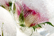 'Roses in ice balls' by Marc Heiligenstein