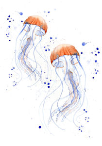 Jellyfish by Kris  Efe