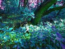 Impressionen aus dem Märchenwald by Eva Dust
