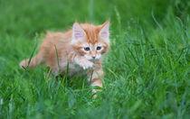 Dsc-2610-dot-mc-kitten11-05-16