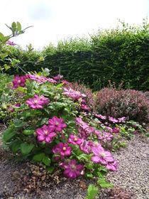 Blume pink von Ivy Müller