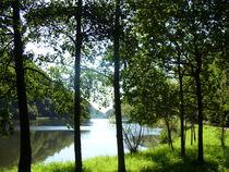 Fluss hinter den Bäumen  von Ivy Müller