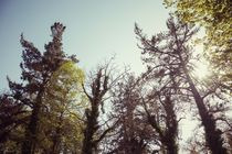 Trees  von Salvatore Russolillo