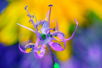 Graceful flower in rain drops von Yuri Hope