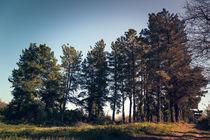 Trees II von Salvatore Russolillo