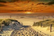 Auf dem Weg durch die Dünen zum Strand von Peter Roder