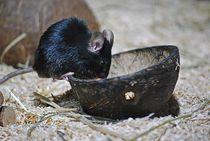 Mäuse sind süß... 2 by loewenherz-artwork